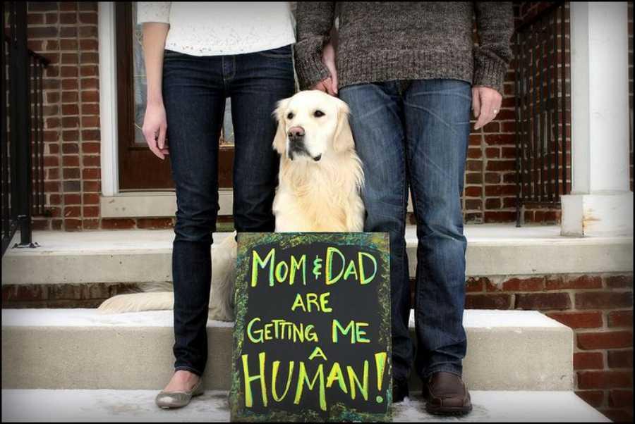 Anuncios divertidos de embarazo con mascotas