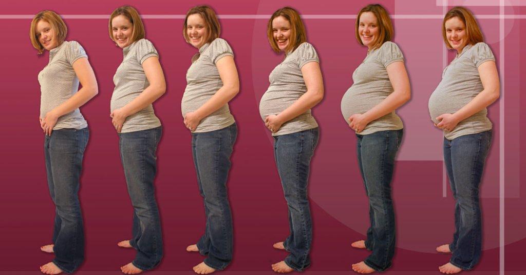 Las etapas del embarazo