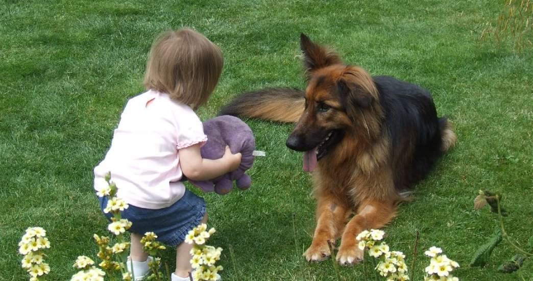 Perros para niños: preparar la llegada del bebé
