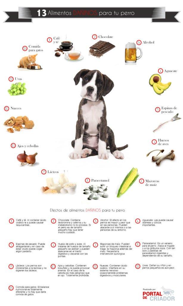 Cómo cuidar a un perro