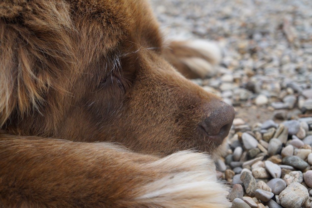 Perros aptos para familias